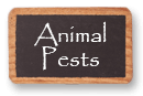 Animal Pests